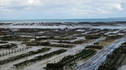 banchi-di-coltivazione